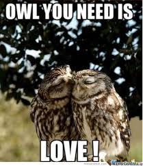 Owl pun